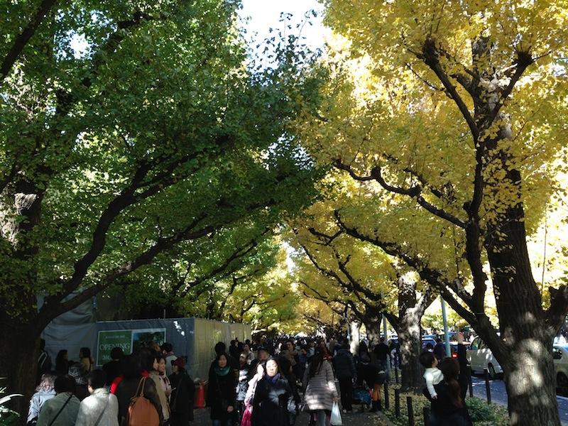 Gente viendo las hojas de los árboles