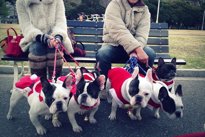 Perros vestidos de Papa Noel