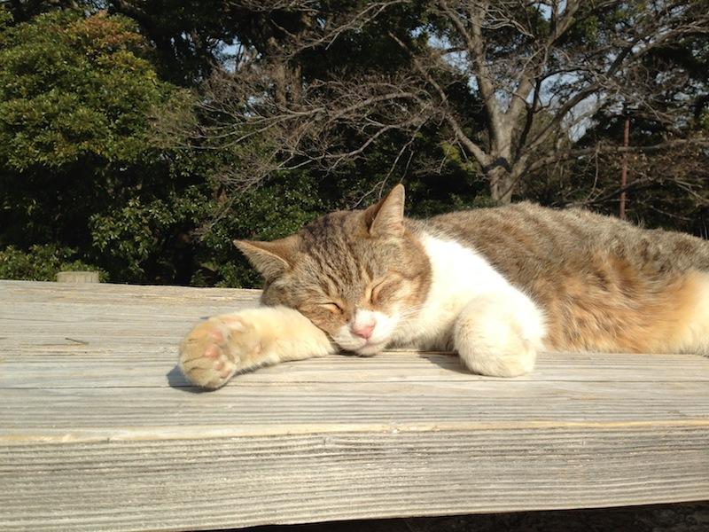 Gato tomando el sol en los jardines de Hamarikyu