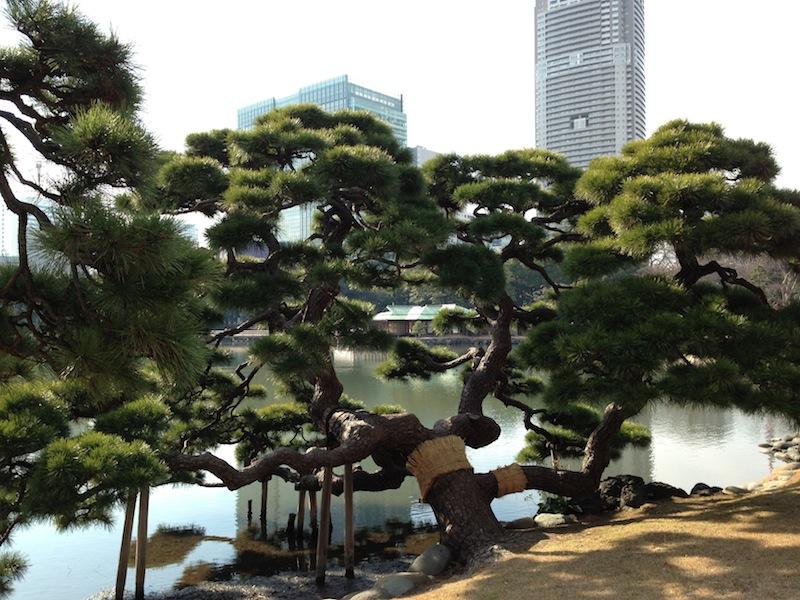 Casa de té en los jardines de Hamarikyu