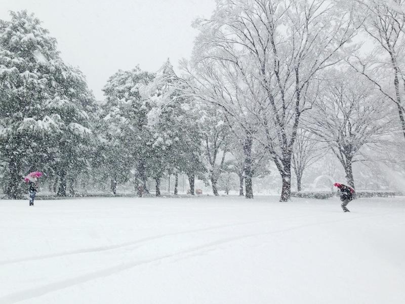Parque de Yoyogi con nieve