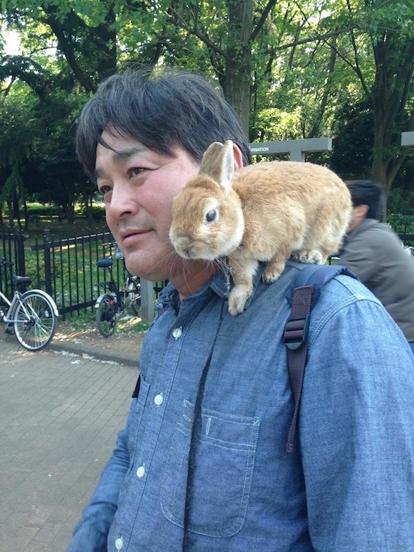 Hombre con conejo de mascota