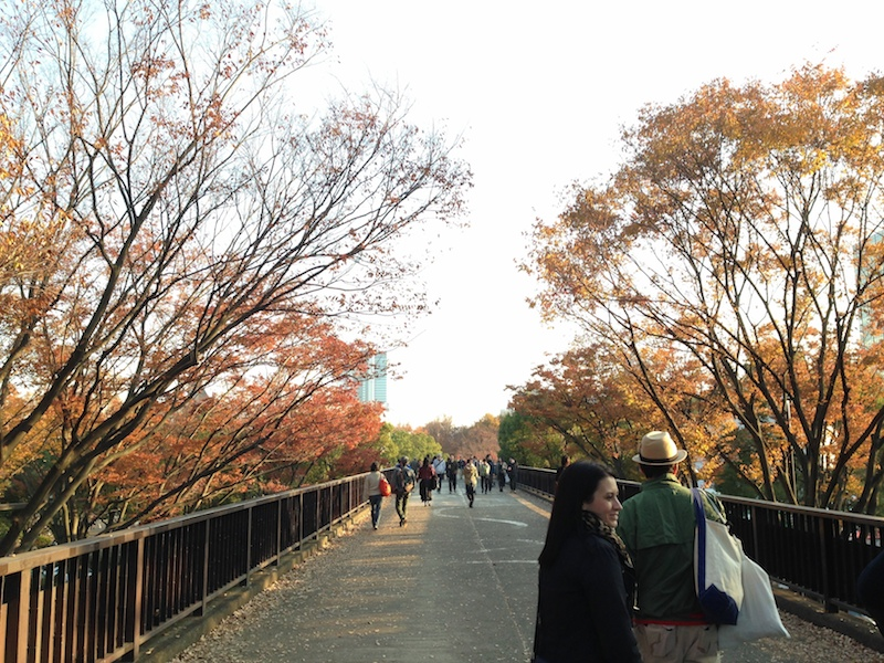Árboles en otoño en Yoyogi